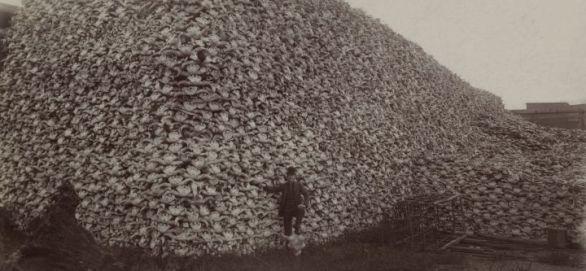 bison_skull_pile_edit-3